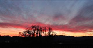 Oak Grove at Sunset