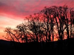 Oak Grove, Evening